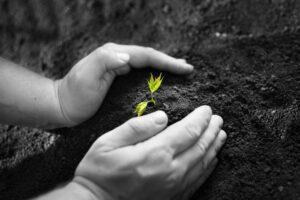We_Plant_Tress